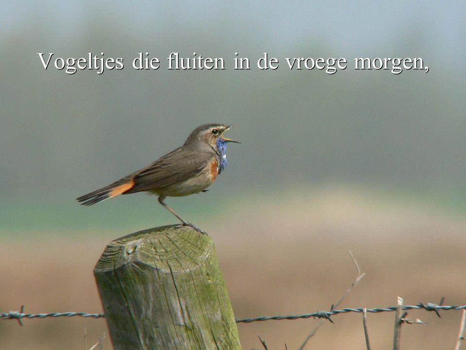 Vogeltjes die fluiten in de vroege morgen,