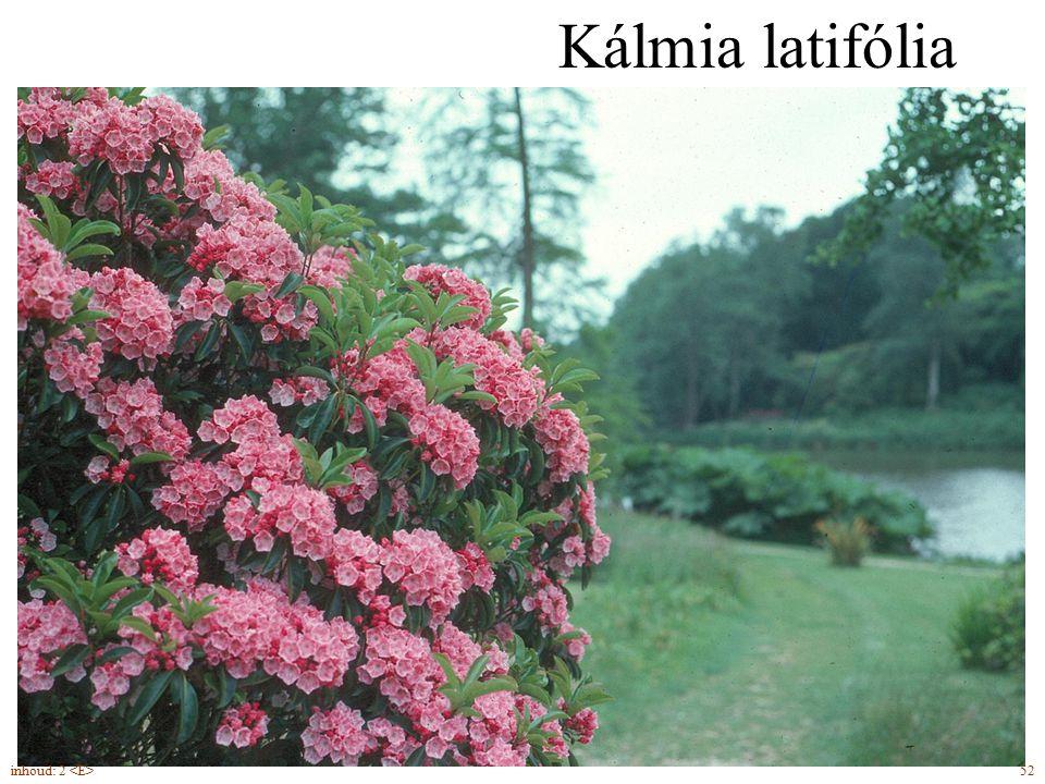 Kálmia latifólia groenblijvend inhoud: 2 <E> 52