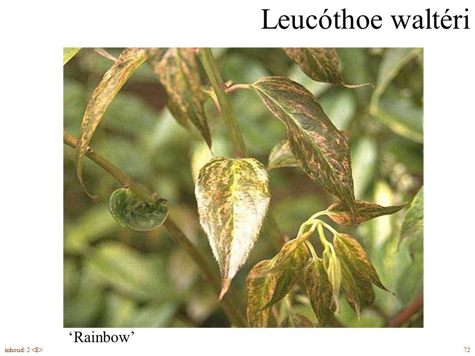 Leucóthoe waltéri 'Rainbow' groenblijvend inhoud: 2 <E> 72