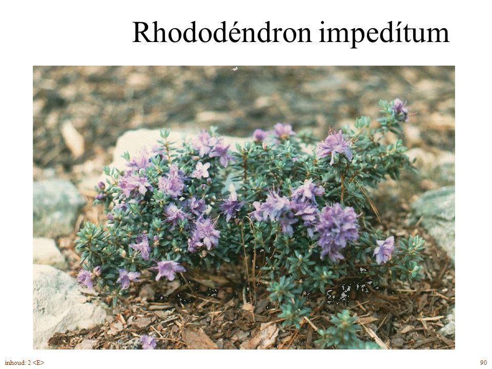 Rhododéndron impedítum