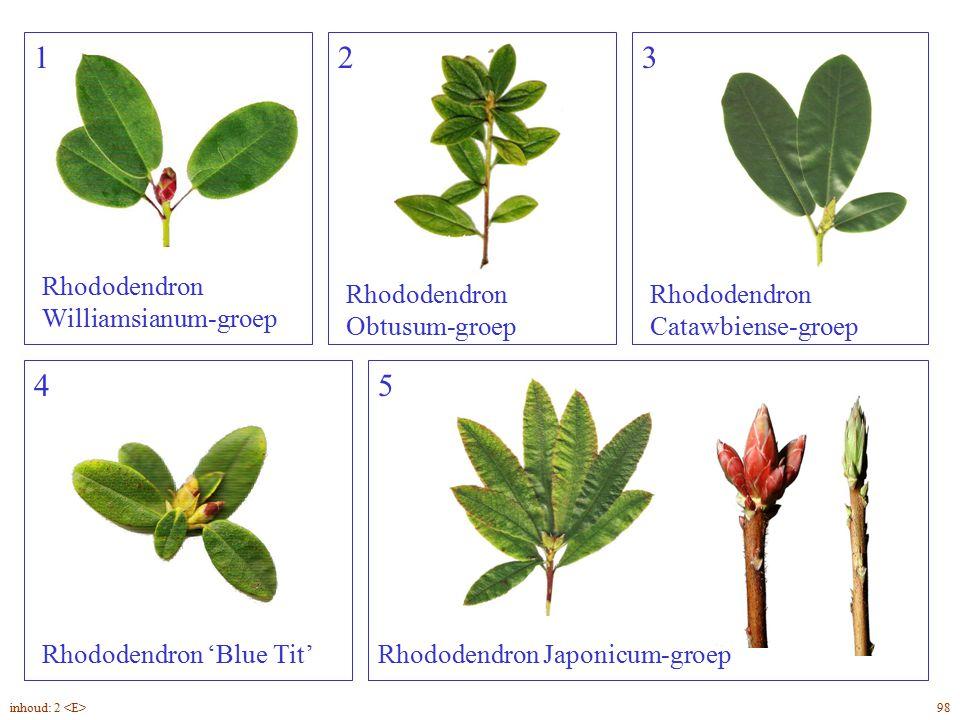 Rhododendron overzicht