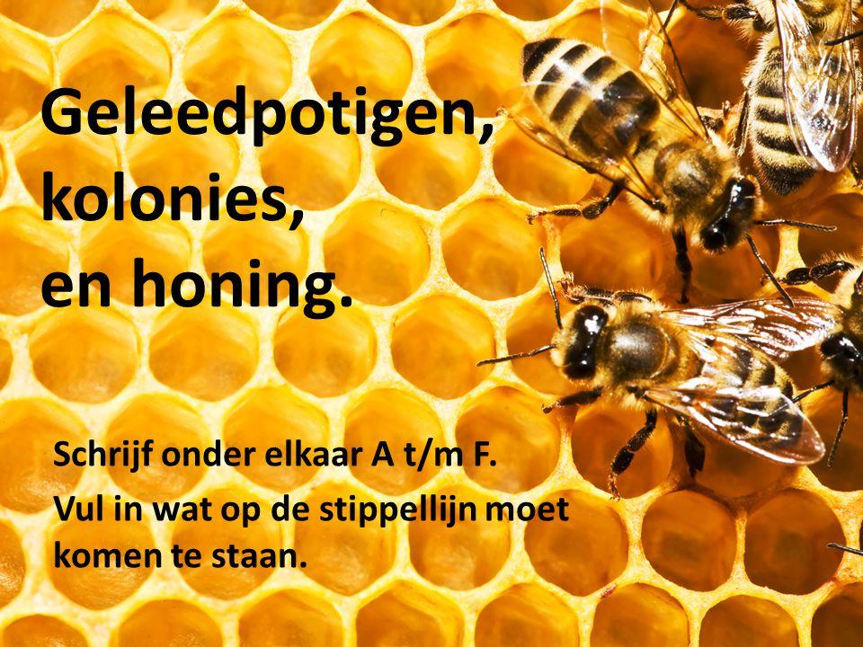 Geleedpotigen, kolonies, en honing.