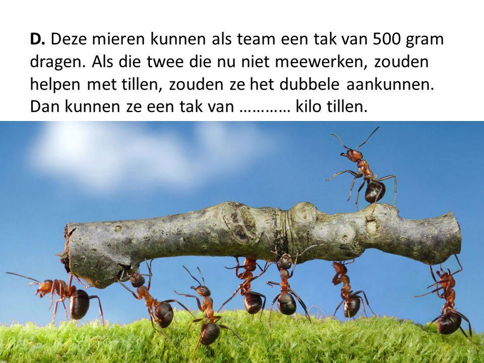 D. Deze mieren kunnen als team een tak van 500 gram