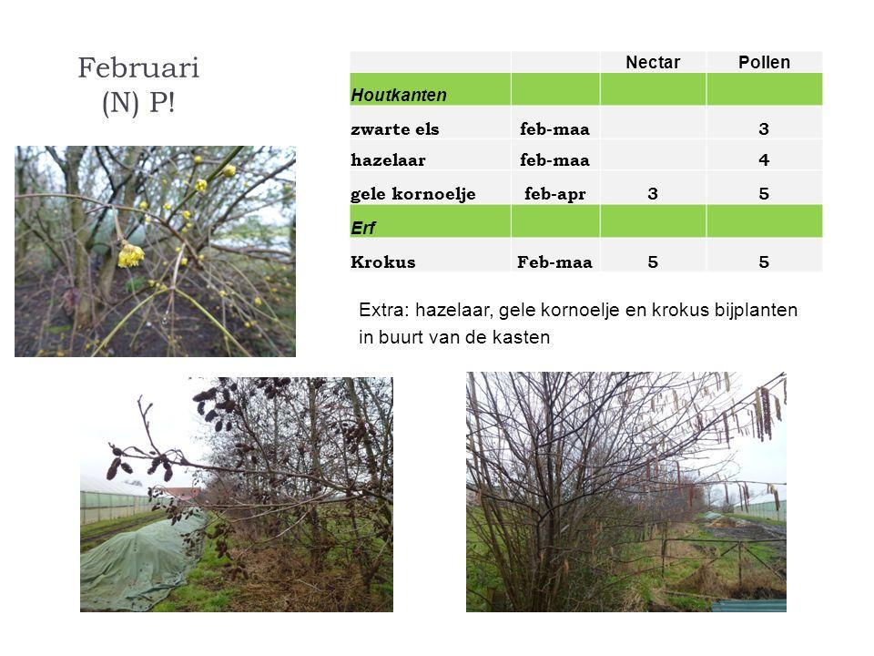 Februari (N) P! Nectar. Pollen. Houtkanten. zwarte els. feb-maa. 3. hazelaar. 4. gele kornoelje.