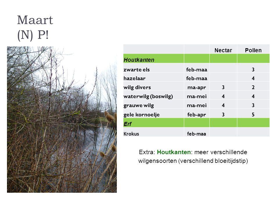 Maart (N) P! Nectar. Pollen. Houtkanten. zwarte els. feb-maa. 3. hazelaar. 4. wilg divers.