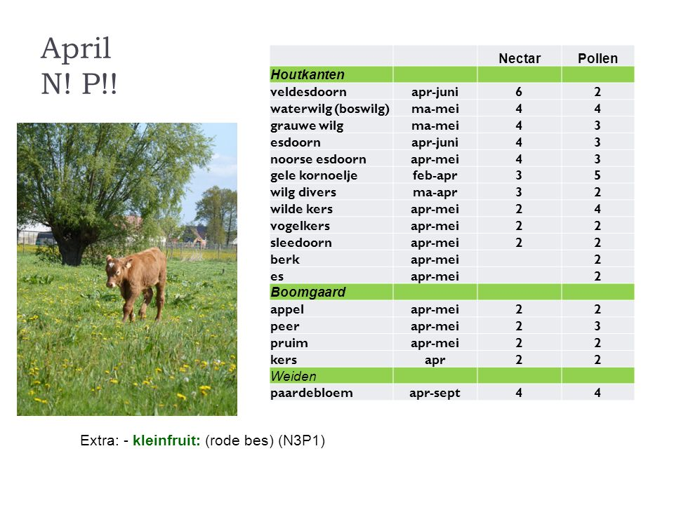 April N! P!! Extra: - kleinfruit: (rode bes) (N3P1) Nectar Pollen