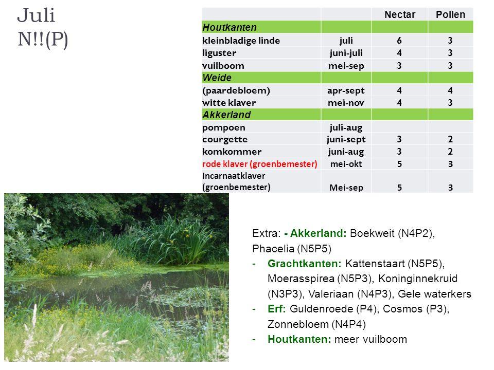 Juli N!!(P) Extra: - Akkerland: Boekweit (N4P2), Phacelia (N5P5)