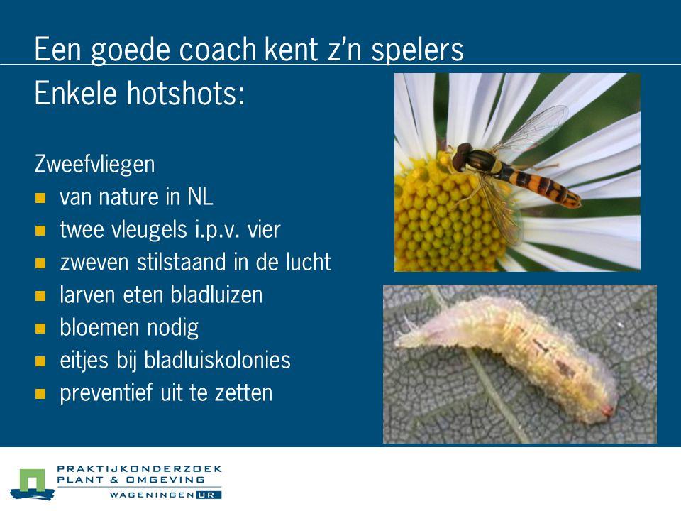 Een goede coach kent z'n spelers Enkele hotshots: