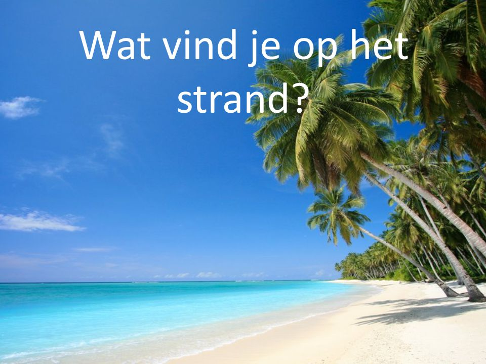 Wat vind je op het strand