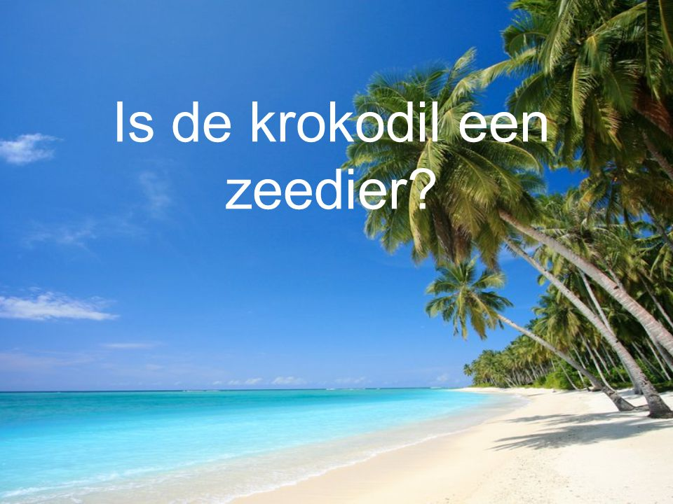 Is de krokodil een zeedier