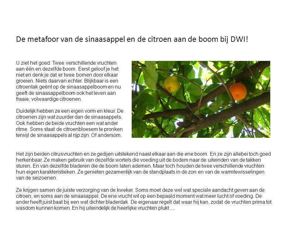 De metafoor van de sinaasappel en de citroen aan de boom bij DWI!