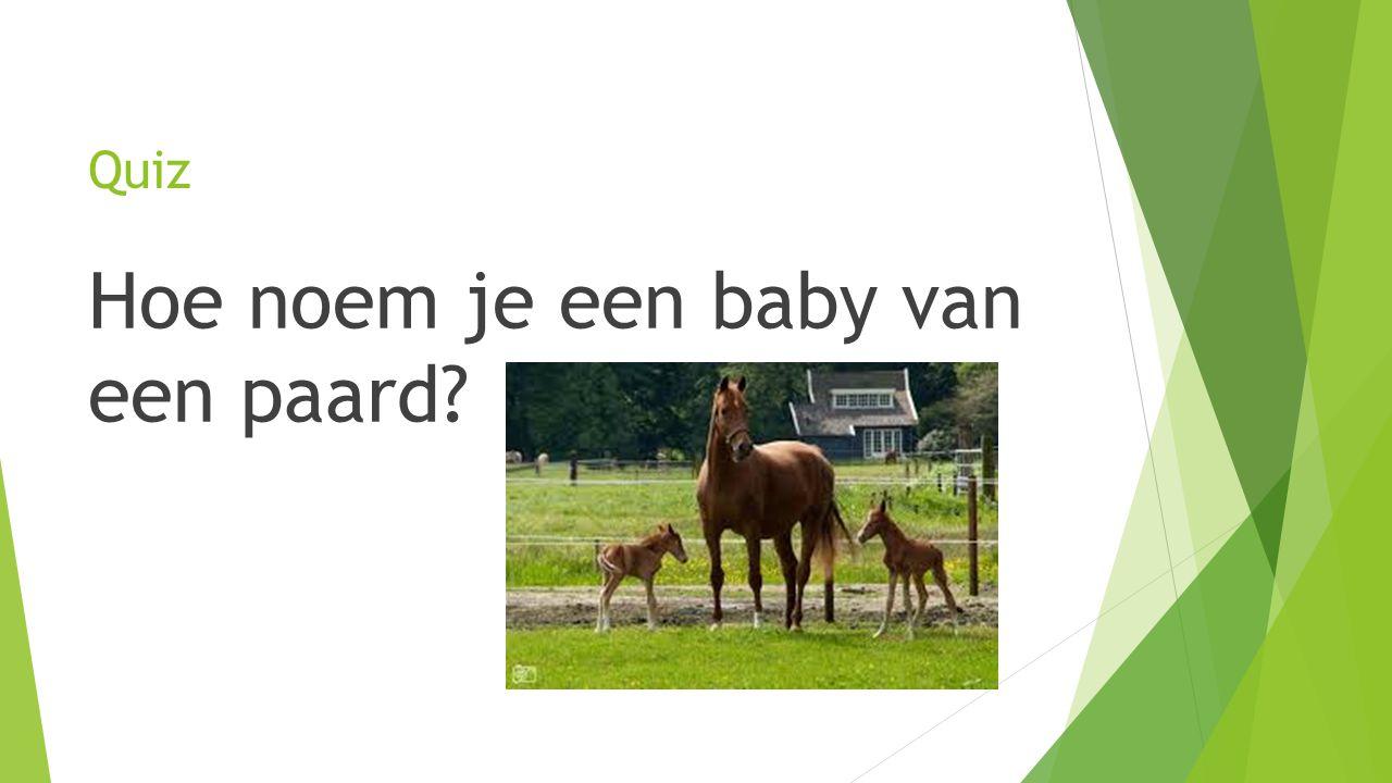 Hoe noem je een baby van een paard