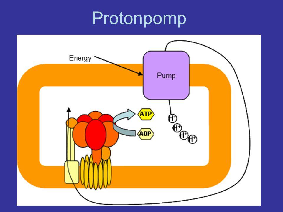 Protonpomp