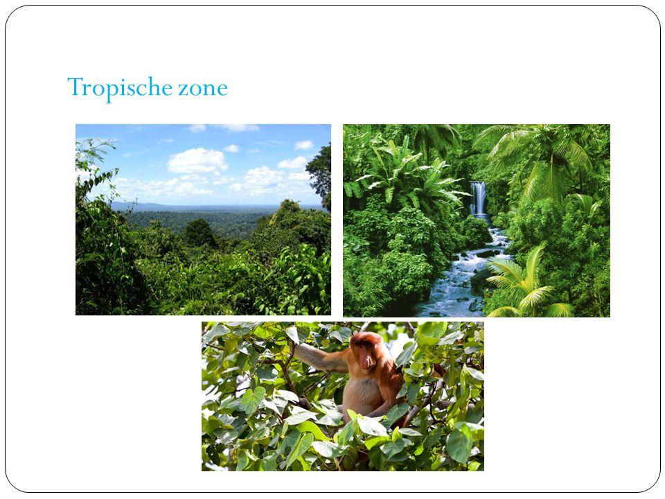 Tropische zone