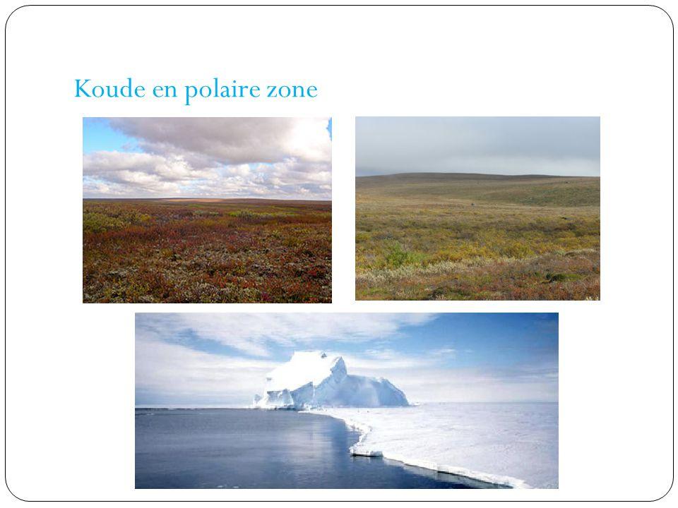 Koude en polaire zone