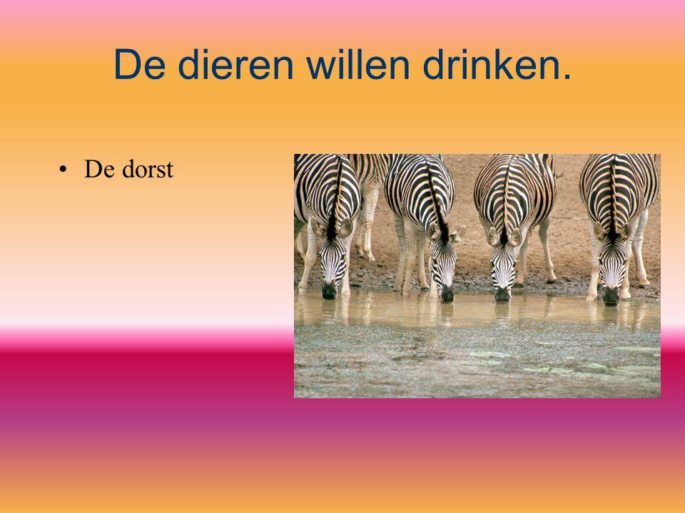 De dieren willen drinken.