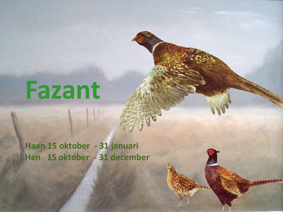 Fazant Haan 15 oktober - 31 januari Hen 15 oktober - 31 december