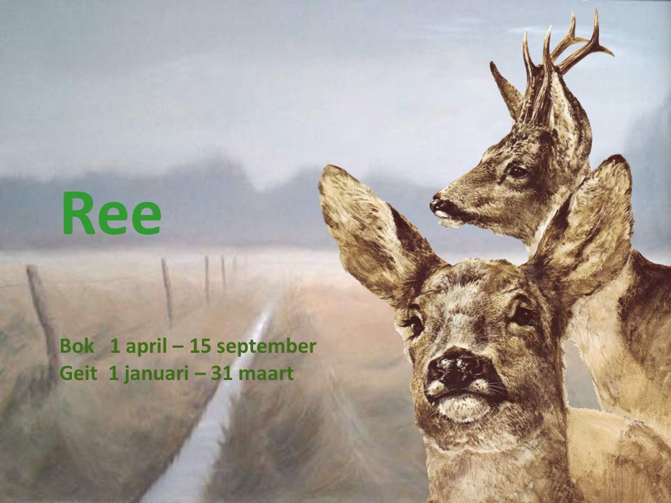 Ree Bok 1 april – 15 september Geit 1 januari – 31 maart