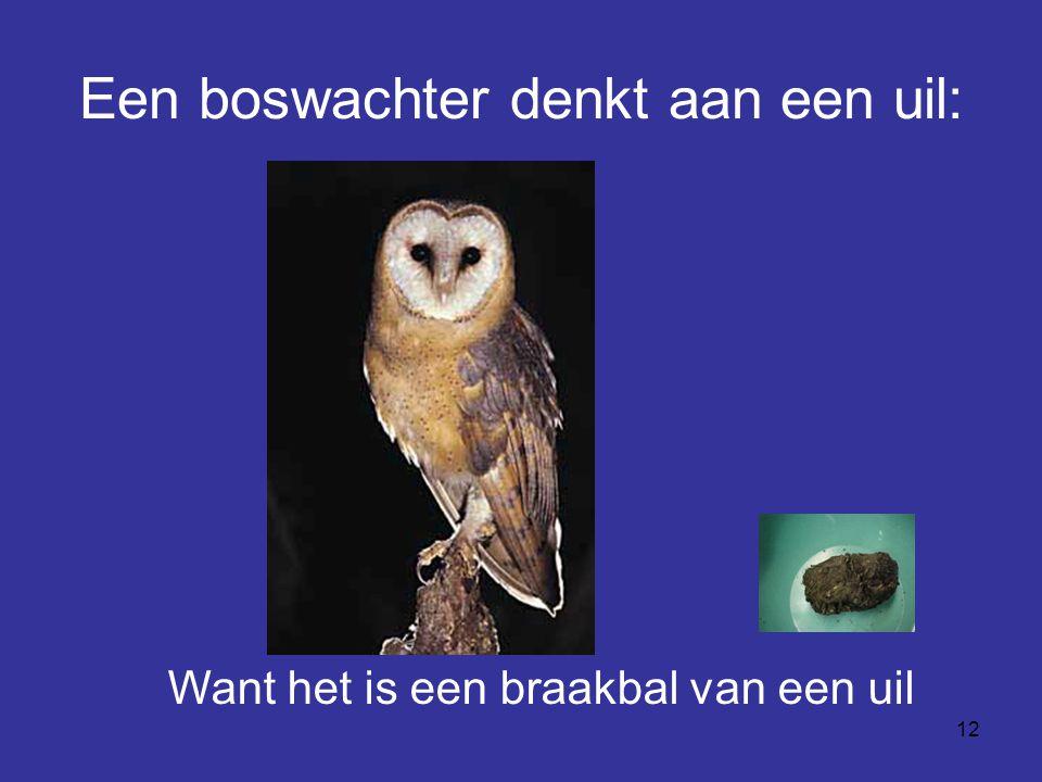 Een boswachter denkt aan een uil: