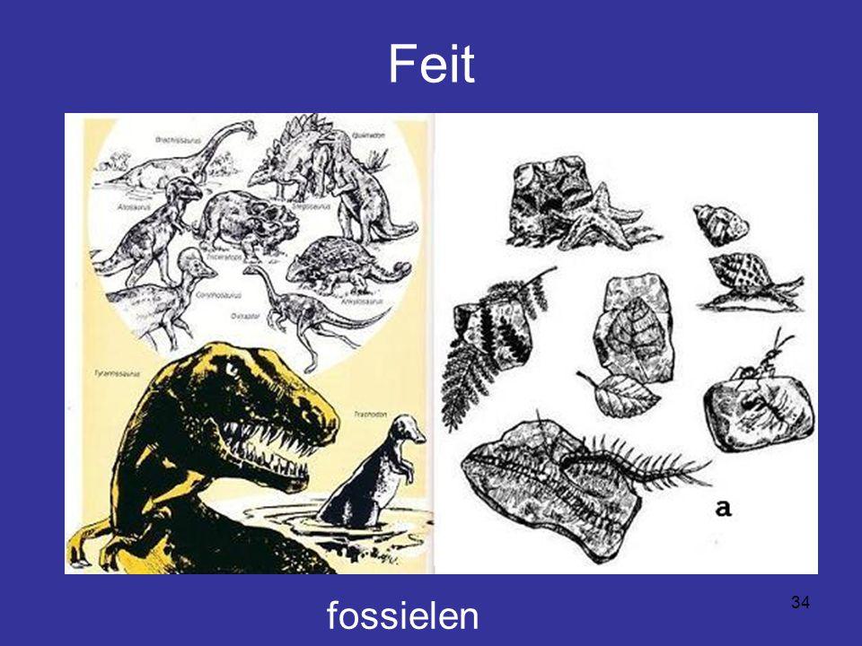 Feit fossielen