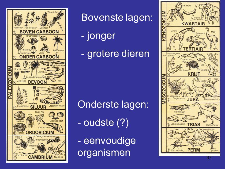 Bovenste lagen: jonger grotere dieren Onderste lagen: - oudste ( ) eenvoudige organismen