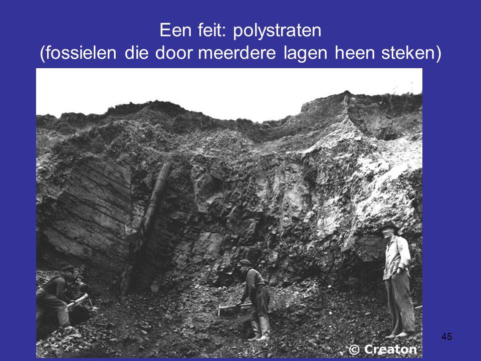 Een feit: polystraten (fossielen die door meerdere lagen heen steken)