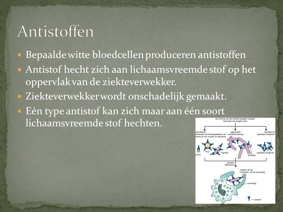 Antistoffen Bepaalde witte bloedcellen produceren antistoffen