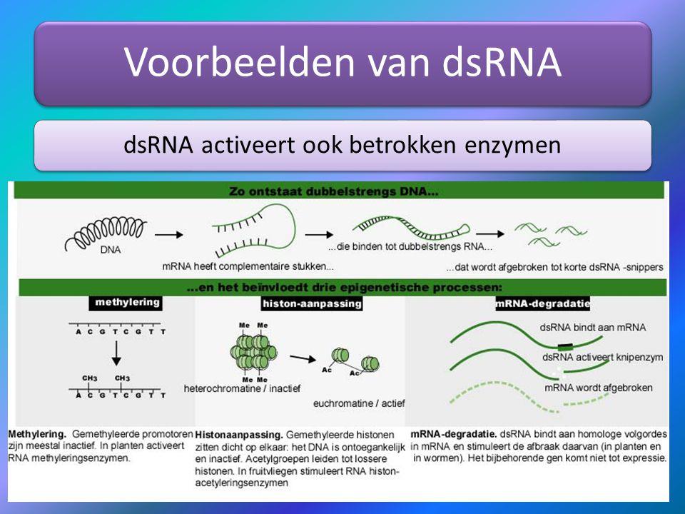 dsRNA activeert ook betrokken enzymen