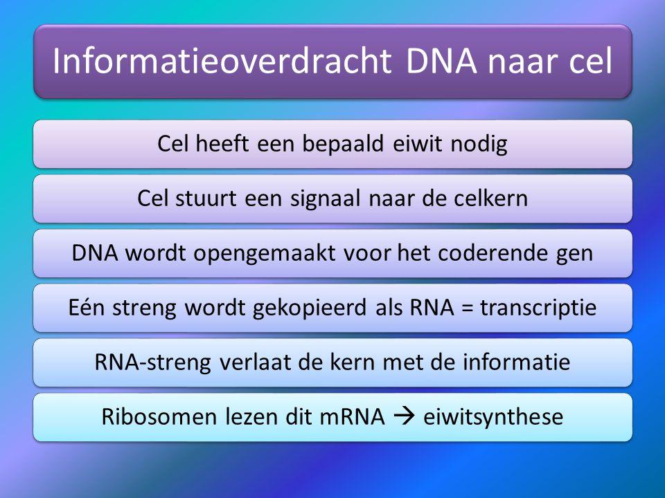 Informatieoverdracht DNA naar cel