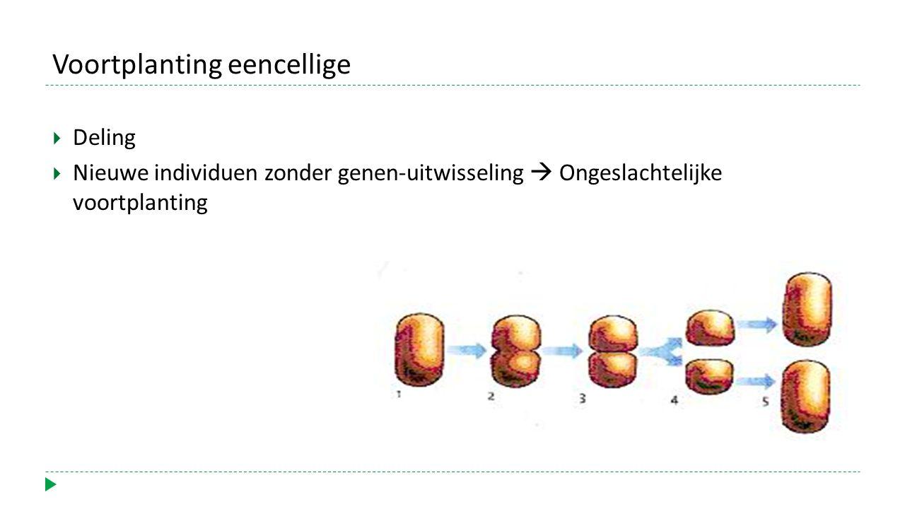Voortplanting eencellige