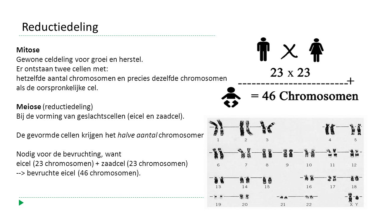 Reductiedeling Gewone celdeling voor groei en herstel.