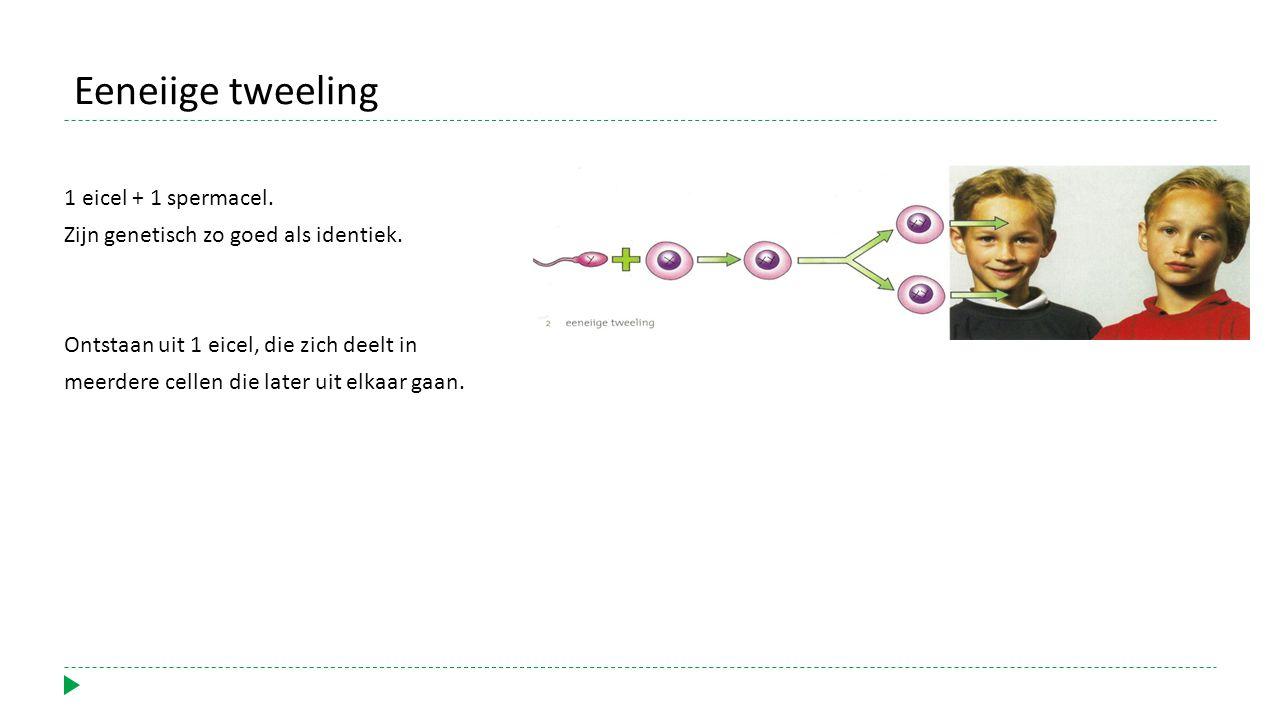 Eeneiige tweeling 1 eicel + 1 spermacel.