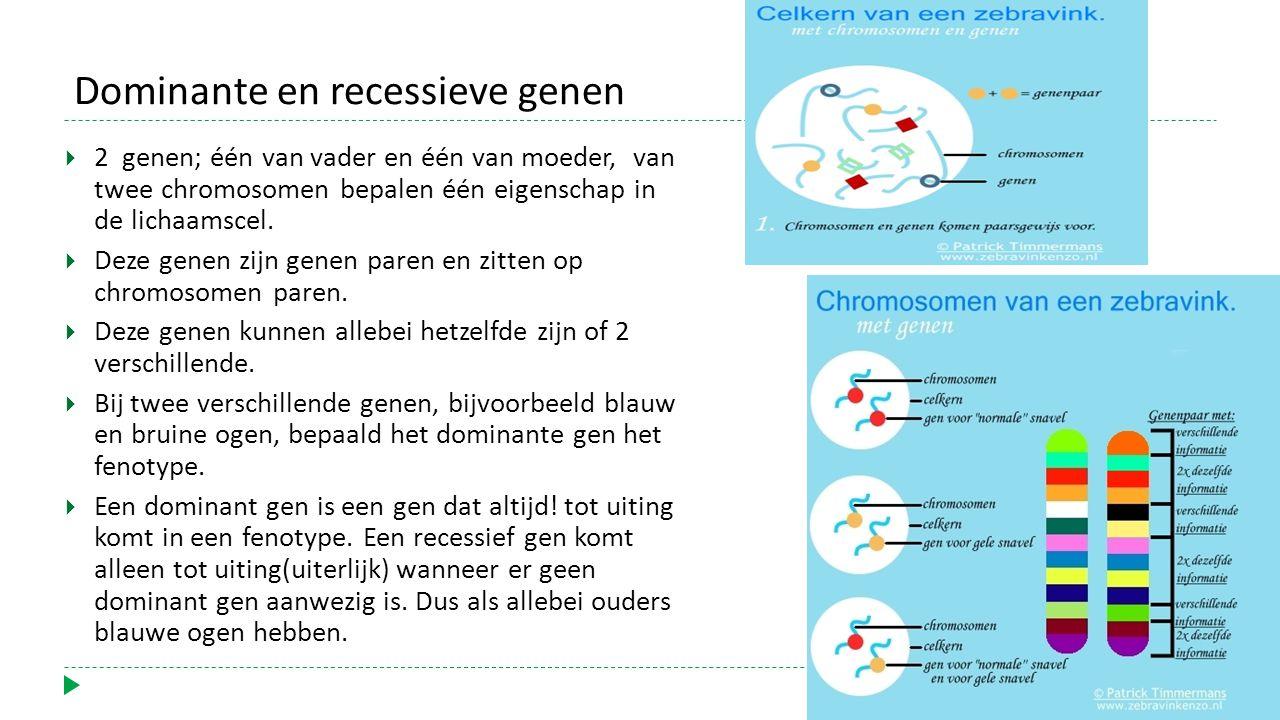 Dominante en recessieve genen