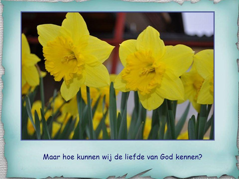 Maar hoe kunnen wij de liefde van God kennen