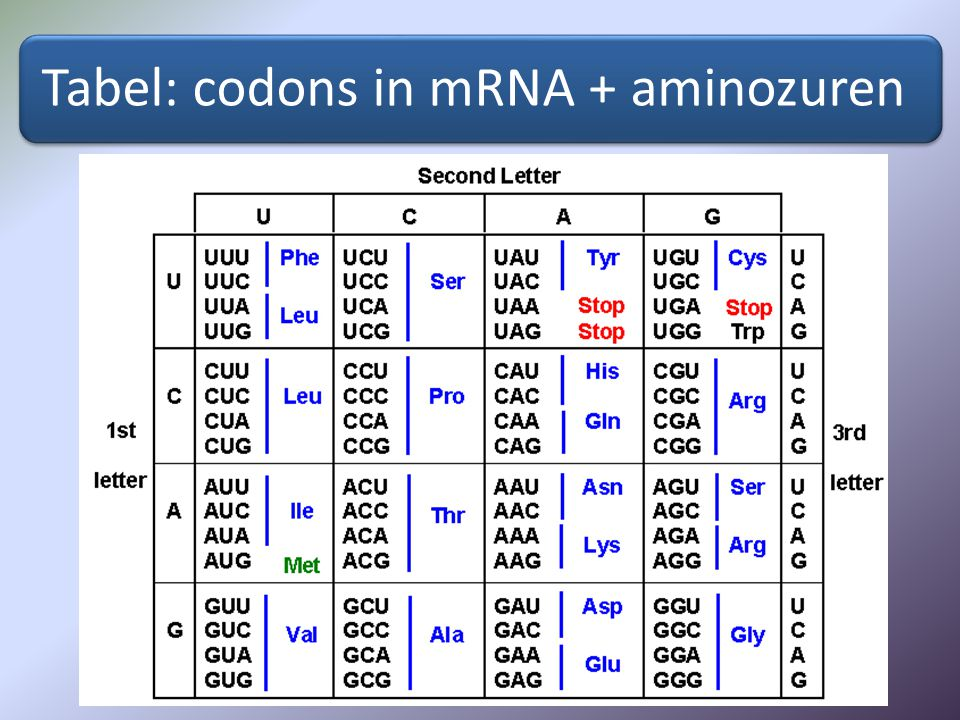 Tabel: codons in mRNA + aminozuren