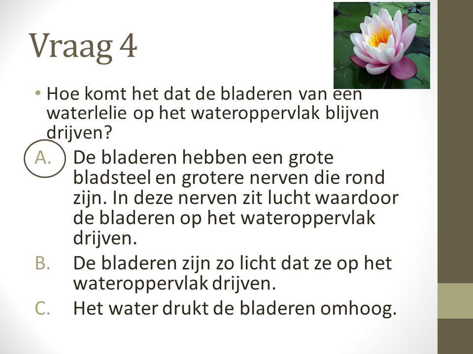 Vraag 4 Hoe komt het dat de bladeren van een waterlelie op het wateroppervlak blijven drijven