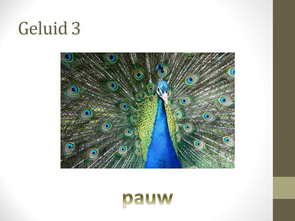 Geluid 3 pauw