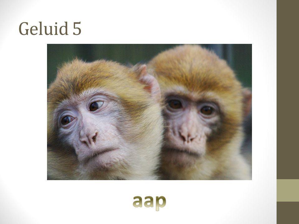 Geluid 5 aap
