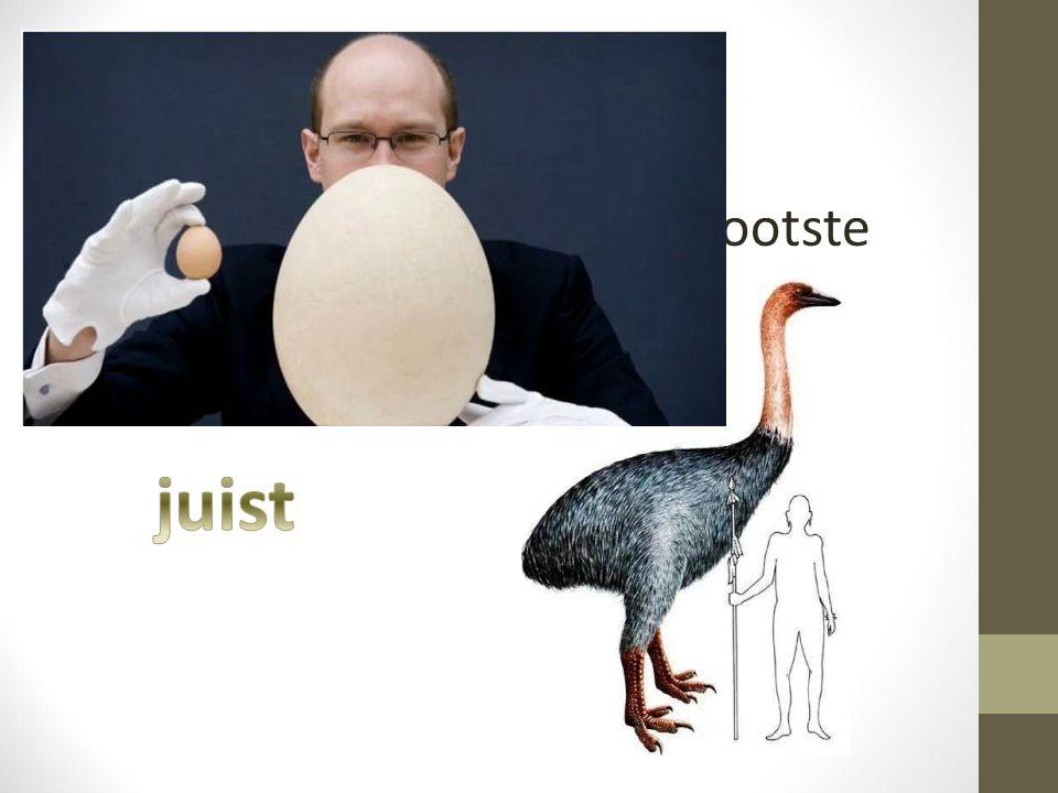 Vraag 5 De olifantsvogel legt de grootste eieren ter wereld. juist
