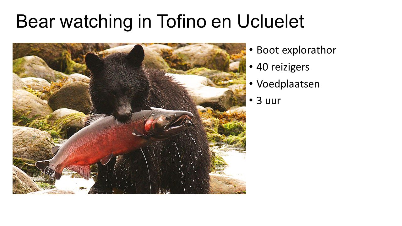 Bear watching in Tofino en Ucluelet