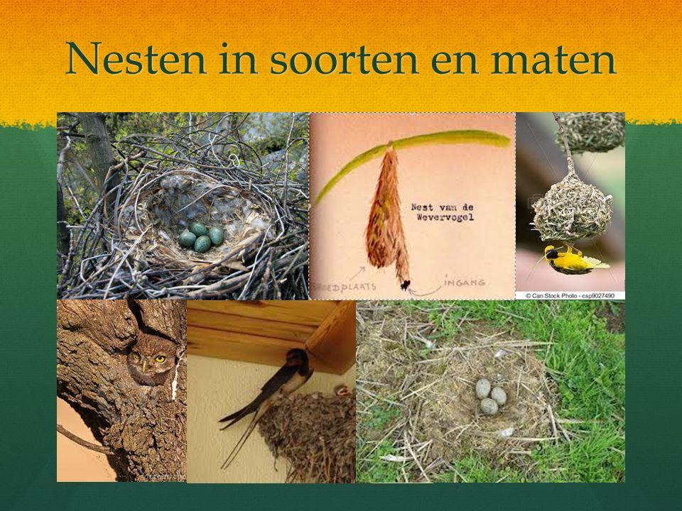 Nesten in soorten en maten