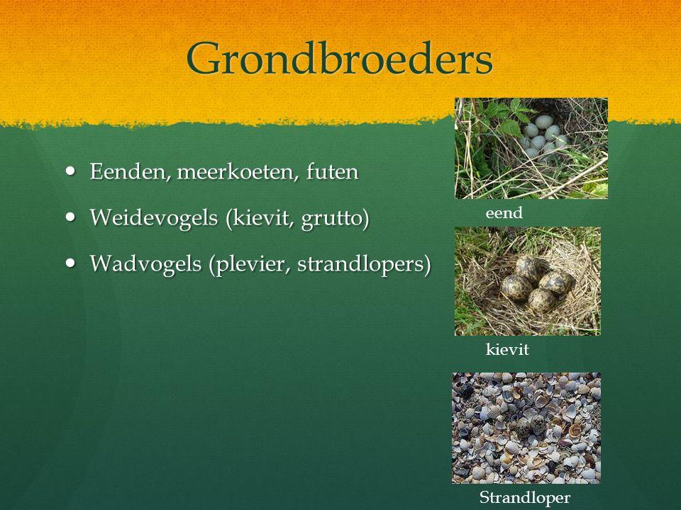 Grondbroeders Eenden, meerkoeten, futen Weidevogels (kievit, grutto)