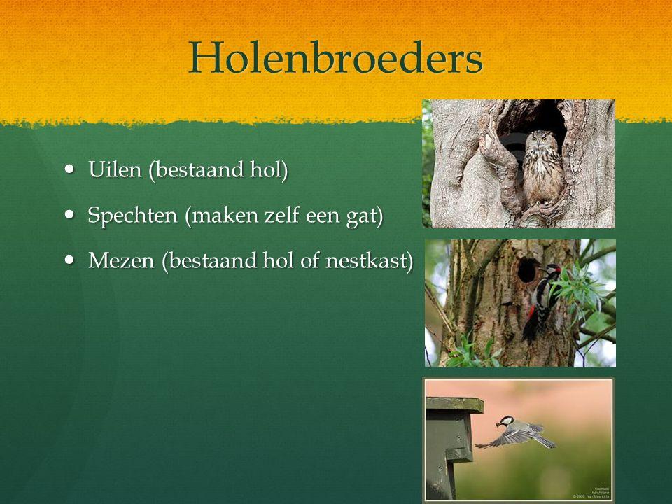 Holenbroeders Uilen (bestaand hol) Spechten (maken zelf een gat)