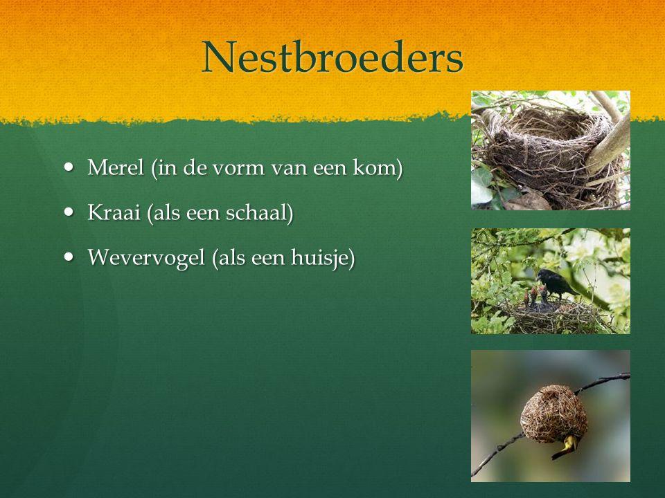 Nestbroeders Merel (in de vorm van een kom) Kraai (als een schaal)