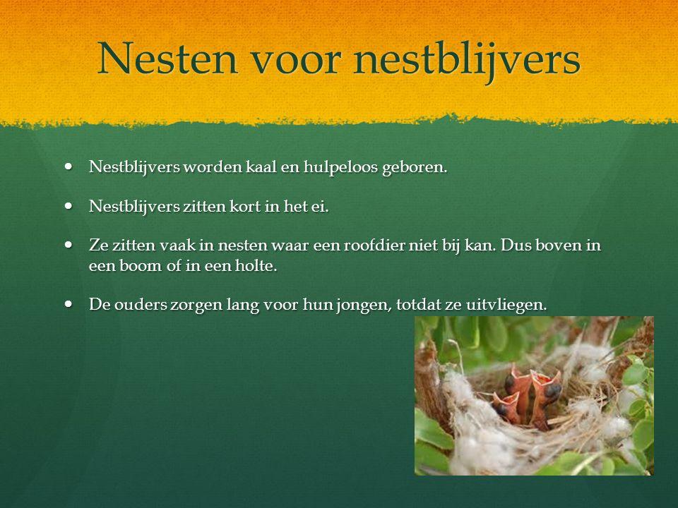 Nesten voor nestblijvers