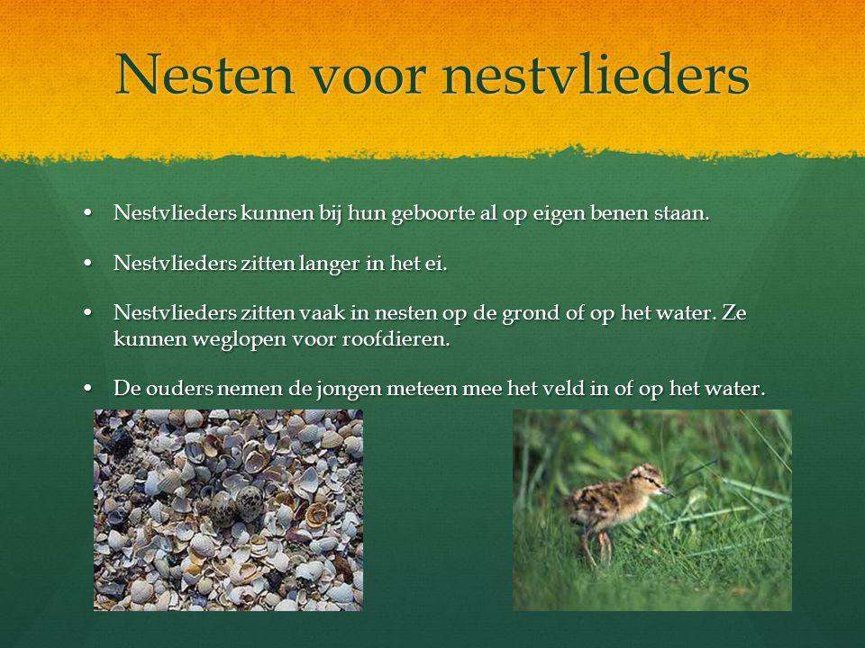 Nesten voor nestvlieders