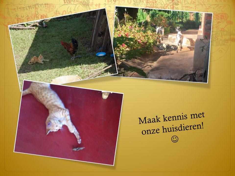 Maak kennis met onze huisdieren! 