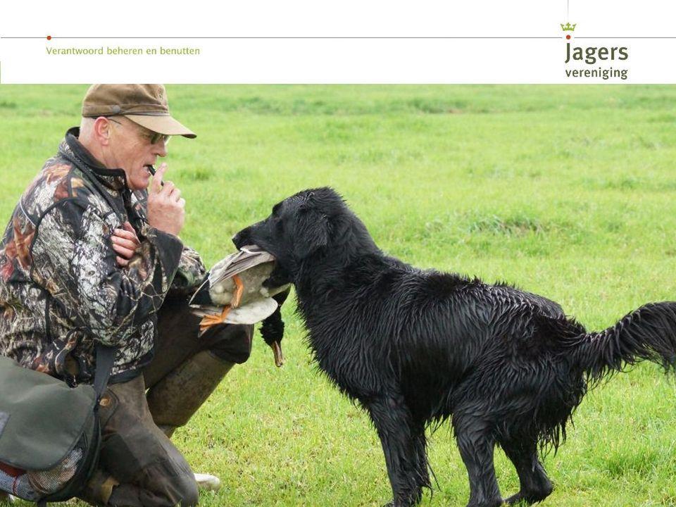 De jacht krijgt een extra dimensie door het werken met jachthonden