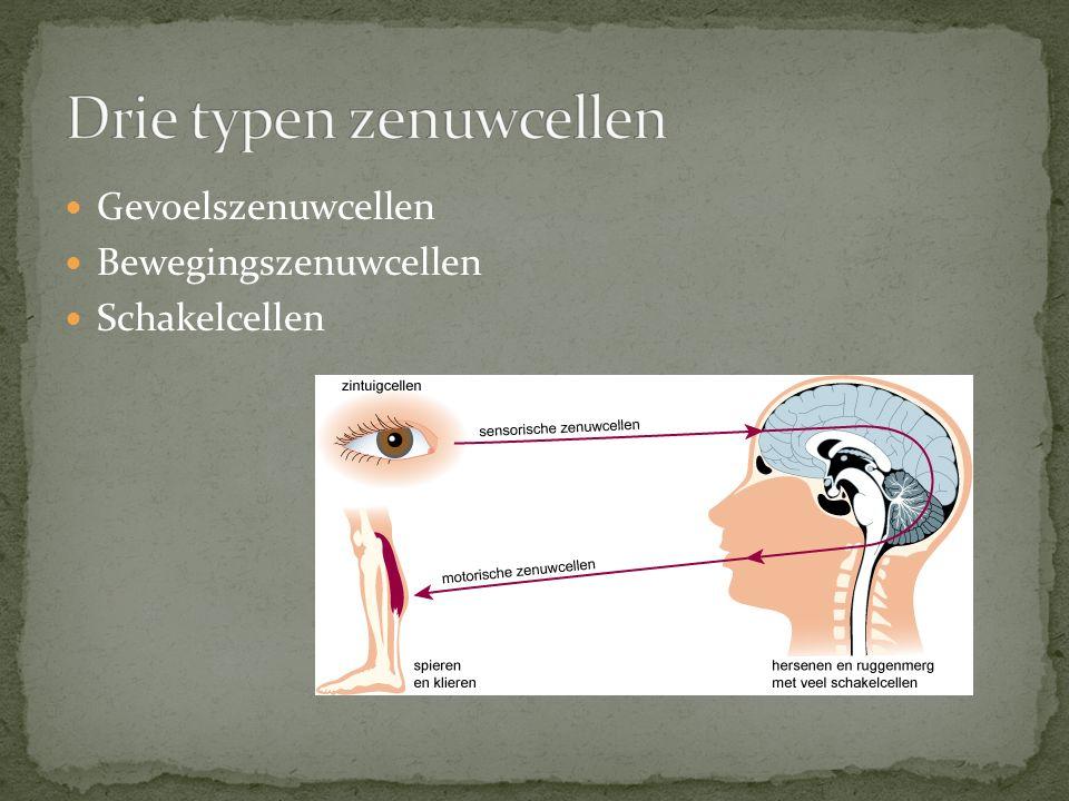 Drie typen zenuwcellen