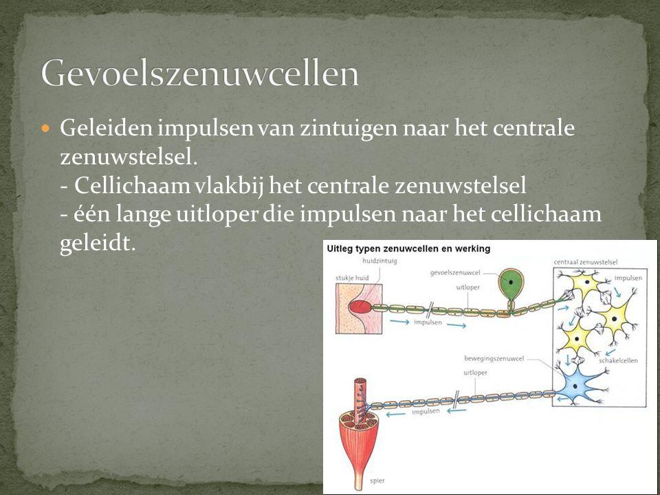 Gevoelszenuwcellen